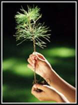 image of a person holding up a spring of an evergreen tree